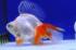 Uploaded image _DSC1111.jpg