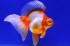 Uploaded image _DSC1251.jpg