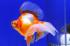 Uploaded image _DSC1267.jpg