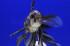 Uploaded image _DSC1549.jpg