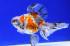 Uploaded image _DSC1583.jpg