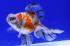 Uploaded image _DSC1589.jpg