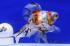 Uploaded image _DSC1623.jpg