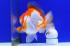 Uploaded image _DSC1773.jpg