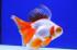 Uploaded image _DSC1982.jpg