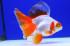 Uploaded image _DSC1988.jpg