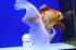 Uploaded image _DSC2120.jpg
