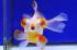 Uploaded image _DSC2218.jpg