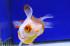 Uploaded image _DSC2220.jpg