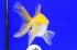 Uploaded image _DSC2259.jpg