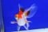 Uploaded image _DSC2327.jpg