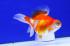 Uploaded image _DSC2331.jpg