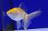 Uploaded image _DSC2342.jpg