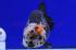 Uploaded image _DSC2434.jpg