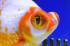 Uploaded image _DSC2728.jpg