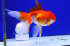 Uploaded image _DSC2743.jpg