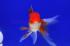 Uploaded image _DSC2757.jpg