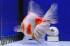 Uploaded image _DSC2934.jpg