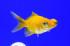 Uploaded image _DSC3078.jpg