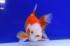 Uploaded image _DSC3368.jpg
