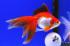 Uploaded image _DSC3403.jpg