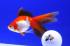 Uploaded image _DSC3405.jpg