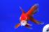 Uploaded image _DSC3407.jpg