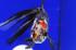 Uploaded image _DSC3438.jpg