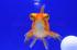 Uploaded image _DSC3454.jpg