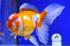 Uploaded image _DSC3838.jpg