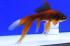 Uploaded image _DSC3840.jpg